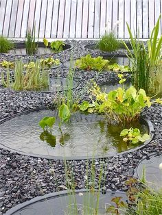 1000 Images About Gardening Water Features On Pinterest