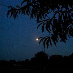 Vrijeme je punog mjeseca (6)