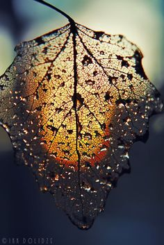 Reminds me of Grandma love to paint skeletonized leaves!