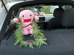Domo wearing his weed necklace and enjoying his ride with me.. :)