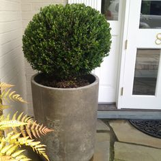 My mothers day gift - Boxwoods with a modern twist