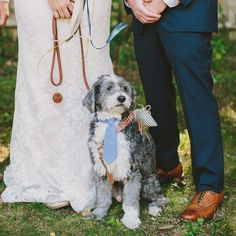 This dog with a tie is pretty much the cutest thing ever!! Love that this couple was able to include their best friend in their sweet Cape Cod wedding we are sharing over #onGWS today. Pop on over to the site to read their story and see the work of these talented artists —> photos: @henryandmac // florals: @ladies_of_foret // planning + design: Freckles, Wit & Co #capecodwedding #dogwedding