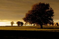 Photo listed in Landscape Shot taken with NIKON 56 shares, 86 likes and 759 views. Nikon D5100, Trees, Celestial, Sunset, Landscape, My Favorite Things, Photography, Outdoor, Outdoors