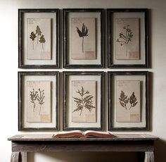 19th C. Framed Herbariums Black (Set of 6) | Restoration Hardware