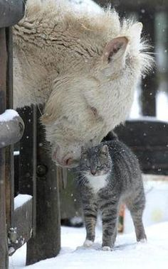 Touch is important ... even animals need physical contact