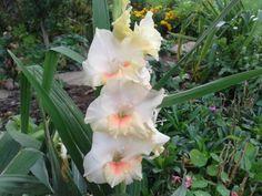 Mečík - a zítra tu prý může sněžit pieces) Plants, Flora, Plant, Planting