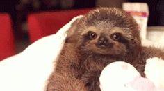 Sloth Inspiration gif. Anything you say, wise magical sloth!
