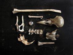 Bones, bones, bones.