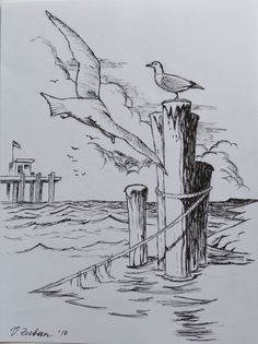 Seagulls sketch in ink. 8in*6in