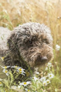 Alfie Dog Days, Dogs, Animals, Animales, Animaux, Pet Dogs, Doggies, Animal, Animais