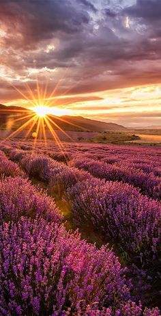 imagine this as hair color ♥ --Incredible sunset looking across lavender field. imagine this as hair color ♥ --Incredible sunset looking across lavender field. Beautiful Sunset, Beautiful World, Beautiful Places, Beautiful Pictures, Amazing Photography, Landscape Photography, Nature Photography, Scenic Photography, London Photography