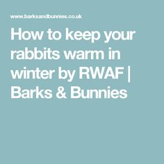 How to keep your rabbits warm in winter by RWAF | Barks & Bunnies