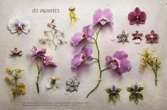 Cartier Art Magazine - 'Collections' - Les Orchidees still life shoot of Orchids by Peter Lippmann