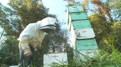 Bees can be challenging to study because each hive has a different personality.-Virginia Tech
