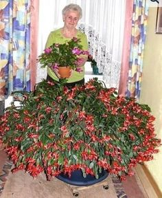 A lady poses with her Christmas Cactus. Succulent Gardening, Cacti And Succulents, Cactus Plants, Garden Plants, House Plants, Succulent Care, Indoor Flowers, Indoor Plants, Christmas Cactus Plant