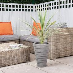 Palm Tree Cordyline Australis Variegated Hardy Tropical 3-4ft (Inc Decorative Planter Choice)  #trees #olivetrees #palmtrees #indoorplants #gardendesign #houseplants #baytreewedding #baytree #wetmyplants
