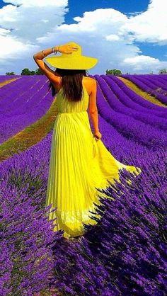 lavender ~ beautiful colors!!