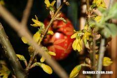 St. Josef, Palmsonntag und Ostereier – Homeschool News und Blog