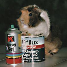 Willi bekennt Farbe: Tapete abreißen und Graffiti sprayen wenn Herrchen ausser Sichtweite ist.