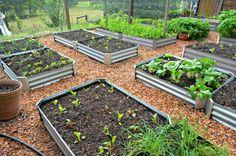 Best Container Vegetables for Beginning Gardeners