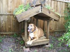 Green roofs for dogs house! Nice!