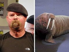 Another gallery of celebrities that look like animals.  Never ceases to amuse!