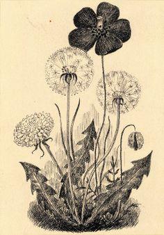 KAJ BECKMAN - THELANDER 1913 - 2002 'Vipp – historien om en trädgård' 1943 Barnbiblioteket Saga 208  G_3_I_Kaj_Beckman-Saga_208_stor.jpg (1049×1504)