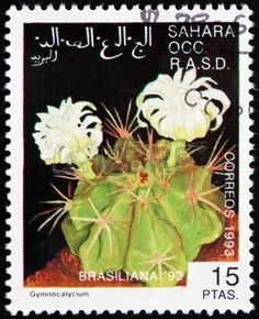 Gymnocalycium Cactus, World Stamp Exhibition Brasiliana 1993,  stamp printed in Sahrawi Arab Democratic Republic,Sahara, circa 1993