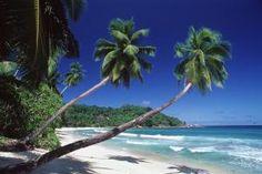 Weißer Sand und Kokospalmen zum Sattsehen. Zu den Seychellen ...