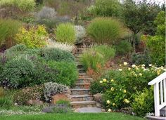 Garden Porn: Gardening on steep slopes , Marin County CA