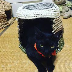 完成です 屋根は伸びたりもします(どうでもいいオプション) ごまは余裕で出入り😄 . #猫のいる暮らし #猫のいる生活 #愛猫 #ネコ  #猫がいる幸せ #catstagram #cat #neko #nekostagram #blackcat #cathouse #handmade #ilovemycat #猫好き #猫  #ねこ #ネコ #猫部 #黒猫愛好家 #黒猫部  #黒猫 #クロネコ #くろねこ #猫ハウス  #にゃんだふるらいふ #手芸 #ハンドメイド  #猫ハウス #にゃんすたぐらむ #にゃんこ