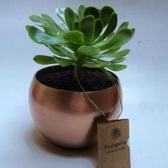 Suculenta en maceta de cobre.... Que quieren que les diga.... LA AMO!!! Es perfecta como regalo para matri o si quieres regalonear a  algún cliente mas firulais. Mas regalos y recuerdos lindos en www.bodeguita.cl #cobre #chile #chileno #handmade #suculenta #eco #green #matrimonio #plantas #plants #regalo #regalos #verde #cooper #chile #bodeguitachile dimensiones maceta: 15 cm de diametro * 12 cm de alto. La altura de la planta varía según la que pongamos, la de la foto es como de 15 cm.