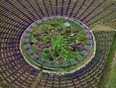 lavendar labrynth