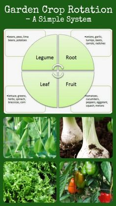 Garden Crop Rotation - simple ideas, graphs and help for getting your own ration schedule started!