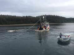 Hauling a set of pink salmon in Prince William Sound.  Photo by Thomas Lopez.  www.seafoodapparel.com