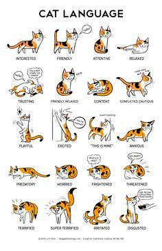 "thecatart:Cat Language 11"" x 17"" Print cat pictures art"