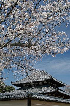Kaidan-in Temple #japan #nara