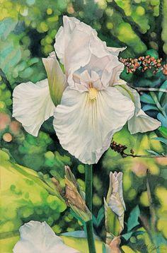 "M.M. Pipkin, watercolor  White Iris (13"" x 9"")   #watercolor, #painting"