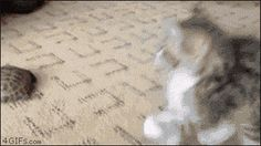 The 214 Best Animated Cat GIFs On The Internet http://www.resharelist.com/animated-cat-gifs/