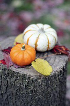 little pumpkin gourds
