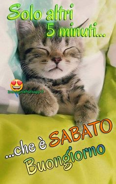 Immagini divertenti per Buon Sabato Buongiorno Good Night, Good Morning, Italian Memes, Good Saturday, Funny, Animals, Vevey, Salvia, Smiley