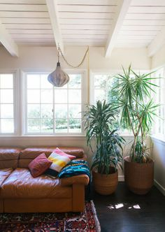 Couch lust plus plants