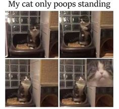 Here is a hilarious funny animal picture picdump Most of it consists of cute animals doing funny things. Some funny animal fails. Anyway, check out these 26 funny pics of funny animals. Funny Animal Memes, Funny Animal Pictures, Cute Funny Animals, Cute Baby Animals, Funny Cute, Cute Cats, Funny Memes, Memes Humor, Hilarious Pictures