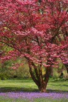 Red Flowering Dogwood...planted one this weekend.  Can't wait to see if it blooms next year.