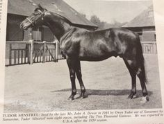 Tudor Minstrel: English Champion 2 yo 1946, multiple British stakes winner.  He was exported to the US to stand stud in 1956.