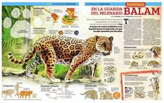 Jaguar Habitat, Placemat Design, Medical Mnemonics, Rare Animals, Animals Of The World, Habitats, Presentation, Poster, Chocolate