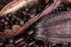 Roasted Cocoa Beans and dried pods, the beans are ready for panning.