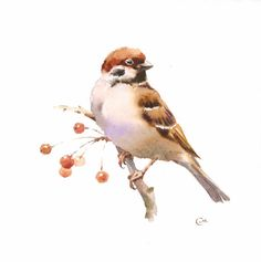Watercolor Sparrow Original Bird Illustration 7 от CMwatercolors