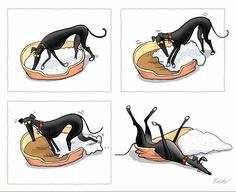 This is so dead on accurate of greyhounds!
