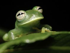 This Frog That Now Sees The World Differently